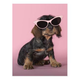 Tragende Sonnenbrillen des Dackelwelpen Postkarte