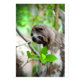 Trägheit im Baum Nicaragua Postkarte