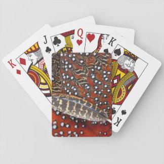 Tragopan versieht Nahaufnahme mit Federn Spielkarten