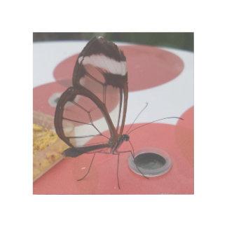 """Transparenter Schmetterling 12"""""""" Verpackung der Galerieleinwand"""