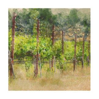 Trauben-Reben im Frühjahr in Napa Valley Holzleinwand