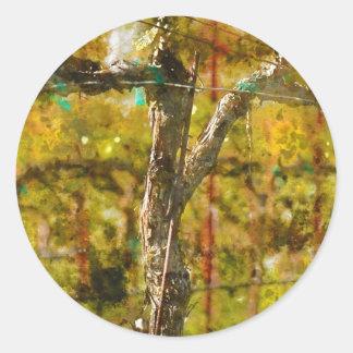 Trauben-Reben im Frühjahr in Napa Valley Runder Aufkleber
