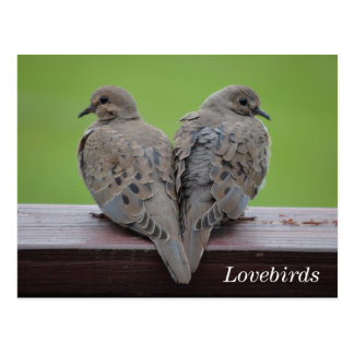 Trauer-Tauben Postkarte