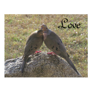 Trauer-Taubenvögel Liebe-Postkarten Postkarte