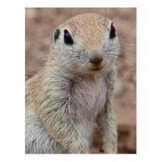 Traurige Eichhörnchen-Postkarte Postkarten