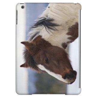 Tri Farbiges Pferd