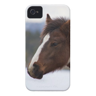 Tri Farbiges Pferd iPhone 4 Case-Mate Hülle