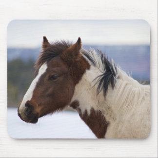 Tri Farbiges Pferd Mousepad