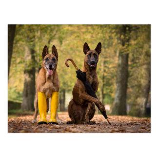 Trick dogs I Postkarte