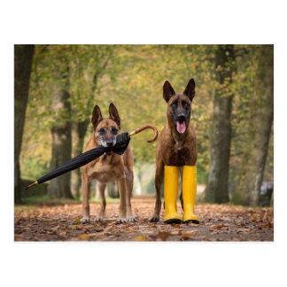 Trick dogs II Postkarte