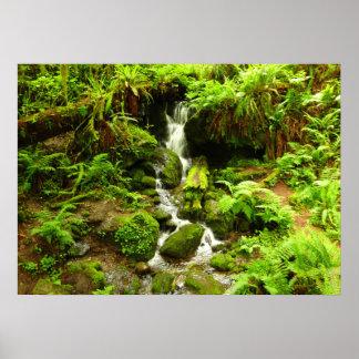 Trillium fällt am Rotholz-Nationalpark Poster