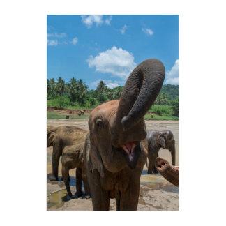 Trinkwasser des Elefanten, Sri Lanka Acryl Wandkunst