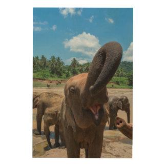 Trinkwasser des Elefanten, Sri Lanka Holzleinwand