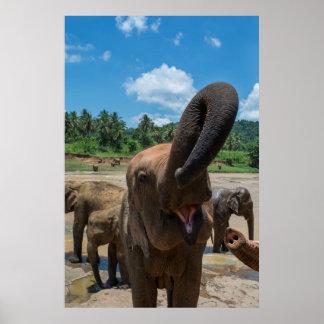 Trinkwasser des Elefanten, Sri Lanka Poster