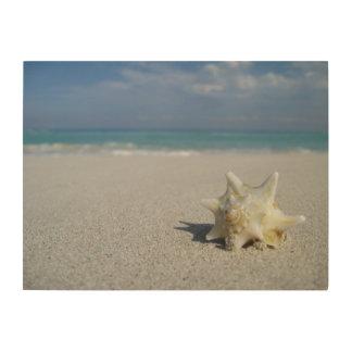 Tritonshorn auf dem Strand: Varadero, Kuba Holzdruck