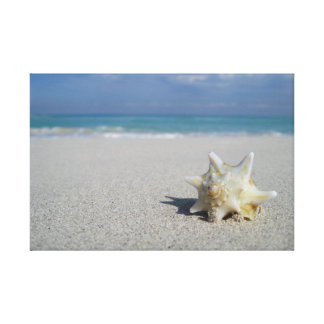 Tritonshorn auf dem Strand: Varadero, Kuba Leinwanddruck