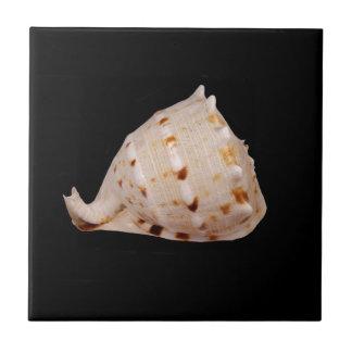 Tritonshorn-Muschel-Keramik-Foto-Fliese Keramikfliese