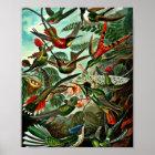 Trochilidae - Kolibris Poster