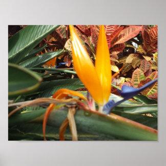 tropische Dschungel-Blume Poster