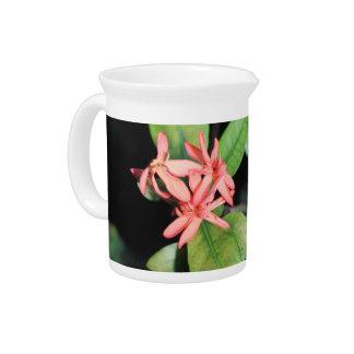 Tropische exotische korallenrote Blume, Kew Getränke Pitcher