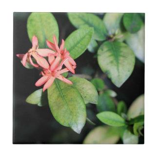 Tropische exotische korallenrote Blume, Kew Keramikfliese
