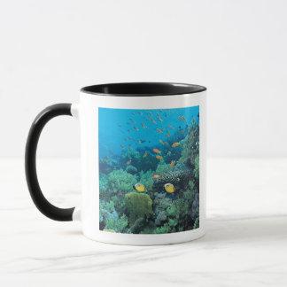 Tropische Fische, die über Riff schwimmen Tasse
