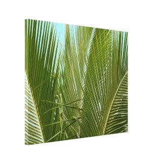 Tropische Hawaii-Palme Leinwanddruck