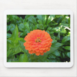 Tropische orange Blume Blumenhawaii Mousepad