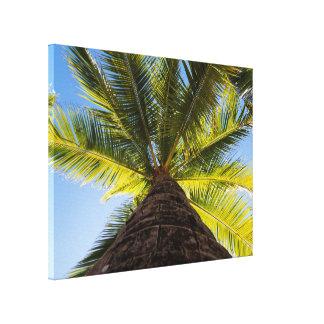 Tropische Palme in The Sun Leinwanddruck