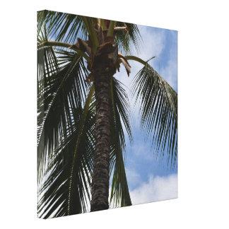Tropische Palme Kauais Leinwanddruck