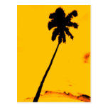 Tropische Palme Postkarten