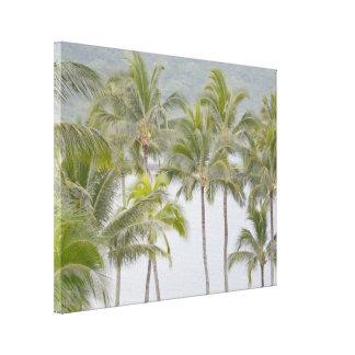Tropische Palmen an Kalapaki Bucht Leinwanddruck