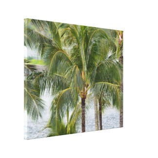 Tropische Palmen in Hawaii Leinwanddruck