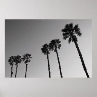 Tropische Palmen Plakat, Druck Poster