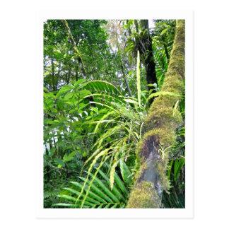 Tropische Pflanzen am Staatsangehörig-Regenwald EL Postkarte