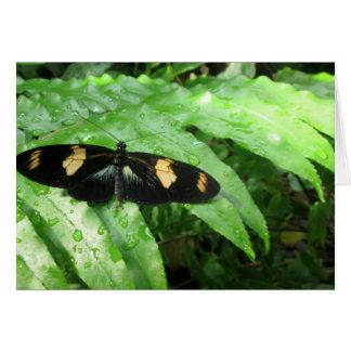 Tropische Schmetterlinge Grußkarte