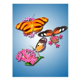 Tropische Schmetterlinge Postkarte