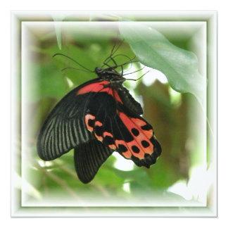 Tropische Schmetterlings-Einladung