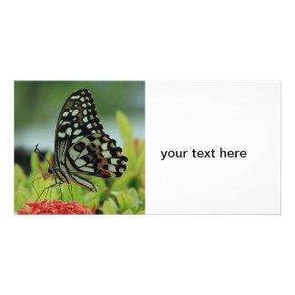 Tropische Schmetterlings-Foto-Karte Bilder Karten