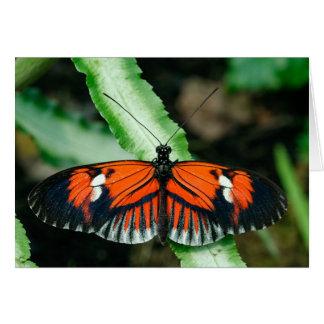Tropische Schmetterlings-Gruß-Karte Grußkarte