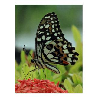 Tropische Schmetterlings-Postkarte