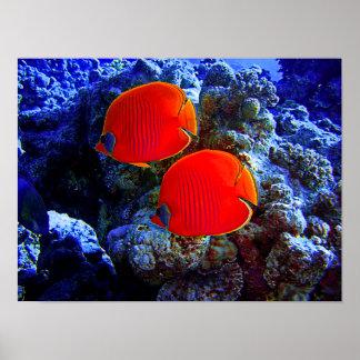 Tropische unterseeische Fisch-Schwimmen in der Poster