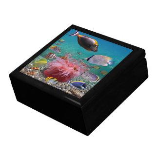 Tropischer Fischetrinket-Kasten Schmuckschachtel