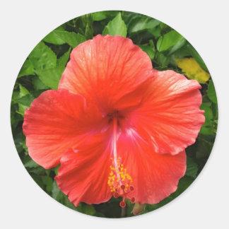 Tropischer roter Hibiskus Bonita Springs Florida Runder Aufkleber