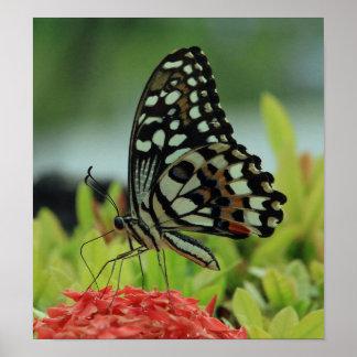 Tropischer Schmetterlings-Druck Poster