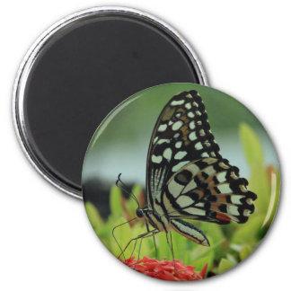 Tropischer Schmetterlings-Magnet Runder Magnet 5,7 Cm