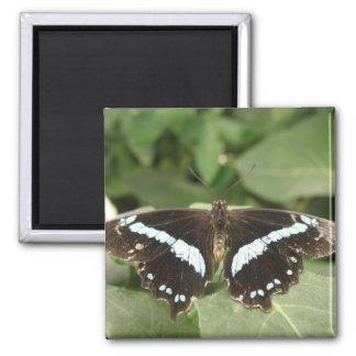 Tropischer Schmetterlings-Schwarzweiss-Magnet Quadratischer Magnet