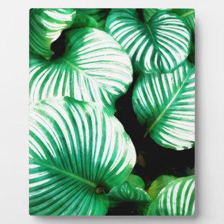 Tropisches Blätter Fotoplatte