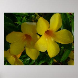Tropisches Blumen der goldene Trompete-Blumen-II Poster