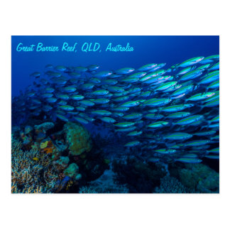 Tropisches Fisch-Great Barrier Reef Korallenmeer Postkarte